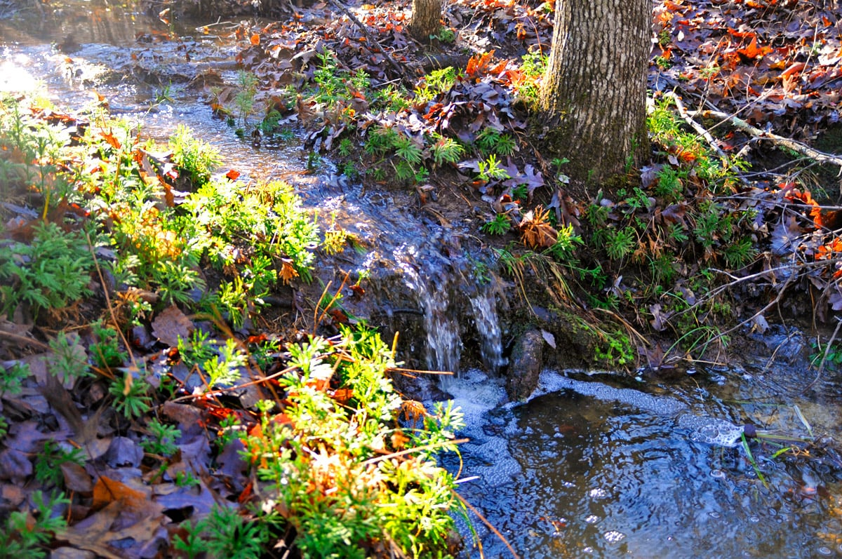 Permanent riparian forest buffer to protect stream