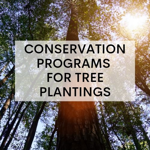 Conservation Programs for Tree Plantings