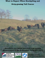 What to Expect When Stockpiling and Strip-grazing Tall Fescue