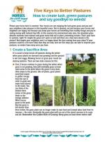 Five Keys to Better Pastures