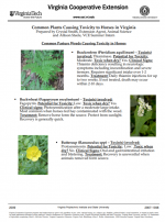 Common Plants Causing Toxicity to Horses in Virginia