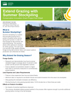 Extend Grazing with Summer Stockpiling