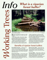 What is a riparian forest buffer?