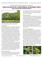 Furiously Aggressive Invasive TREE-OF-HEAVEN, AILANTHUS, PARADISE TREE