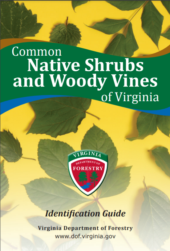 Common Native Shrubs and Woody Vines of Virginia