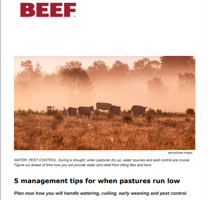 5 management tips for when pastures run low